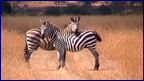 video_afrika